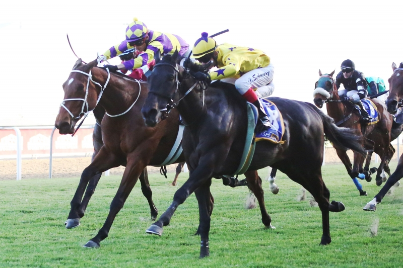 Chilli Affair - Hollywood Syndicate - Horse Racing - Winning Race 8 at Greyville