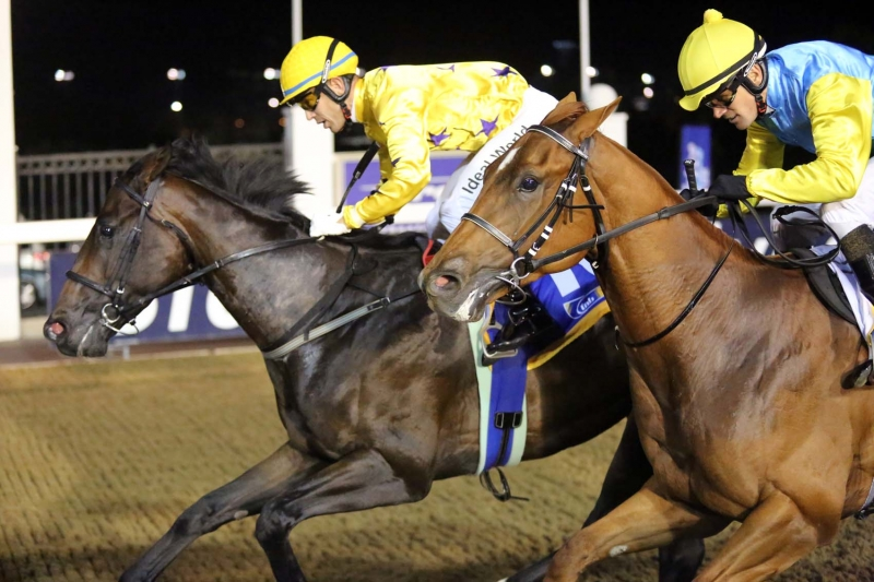 Honest Prince winning for the Hollywood Syndicate in a horse race at Greyville on 17 March 2017. Anthony Delpech is the jockey.