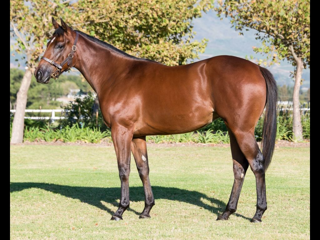 Lady Boulogne - Horse - Filly - Hollywood Syndicate