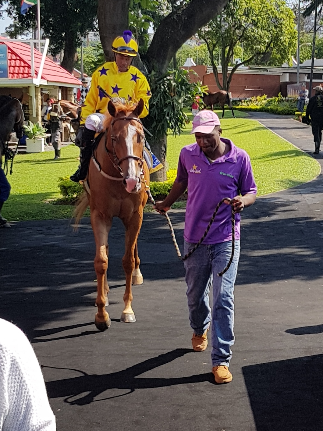 Good Lord Padmore - horse owned by the Hollywood Syndicate