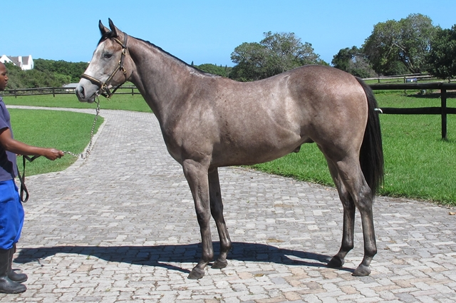 Mighty Smart - sired by Archipenko out of the dam Stan's Smarty Girl. Bred by Ascot Stud. Horse owned by Hollywood Syndicate.