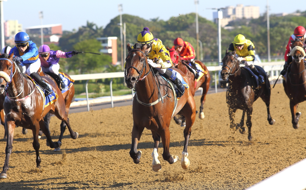 Sunny Bill Du-Toy cruising to his third consecutive victory on the Greyville Polytrack, winning this race by 2.35 lengths. Ridden by Luke Ferraris. Trained by Alyson Wright