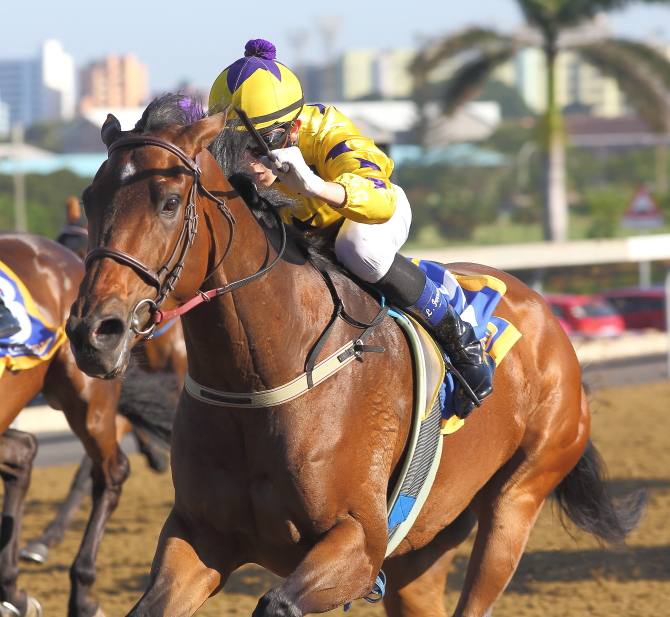 Sunny Bill Du-Toy winning at Greyville under jockey Luke Ferraris - Horse Racing - Trainer Alyson Wright - Hollywood Syndicate