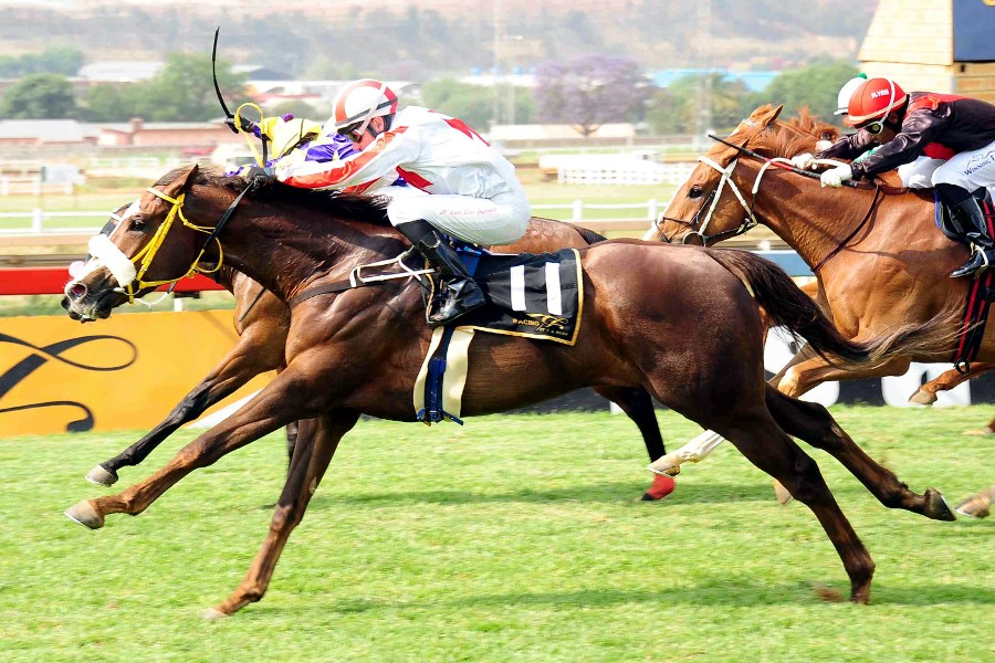 Hot Curry - previously owned and trained by Mike de Kock. Now with Hollywood Syndicate and Clinton Binda