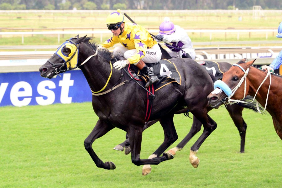 Seventh Son - Hollywood Syndicate - Winning at the Vaal - Bred by Maine Chance Farms (Pty) Ltd