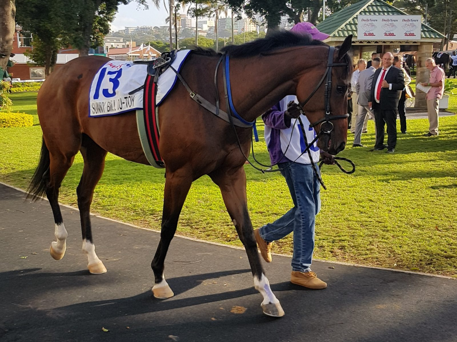 Sunny Bill Du-Toy in the parade ring at Greyville for the Daily News 2000