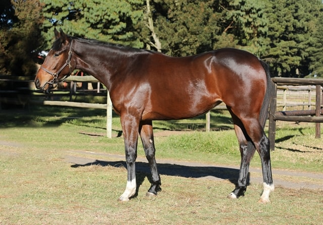 Lot 175 - KZN Yearling Sale - Flame Of Elegance - horse purchased by the Hollywood Syndicate