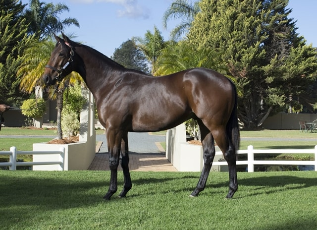 Lot 42 - KZN Yearling Sale - horse purchased by Hollywood-Syndicate