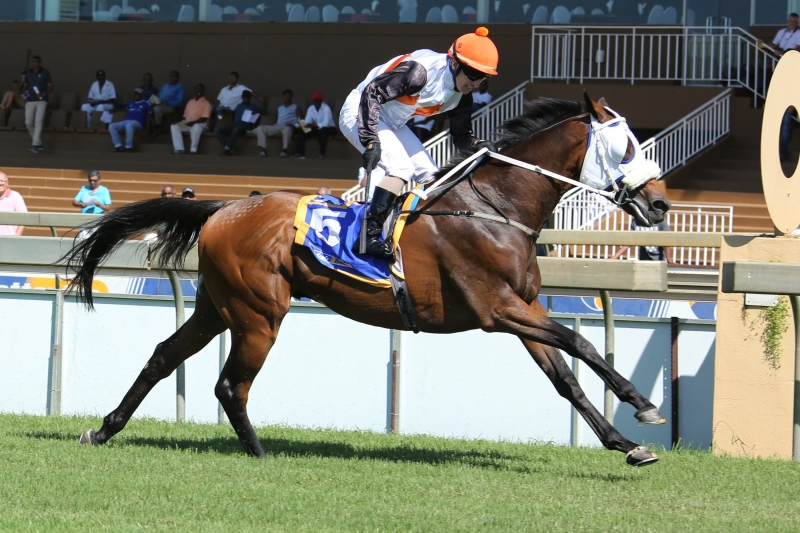 Whiteleaf Hills - Horse - Winning at Scottsville