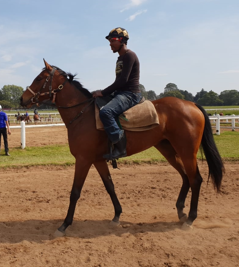 Simply Russian training - horse owned by the Hollywood Syndicate