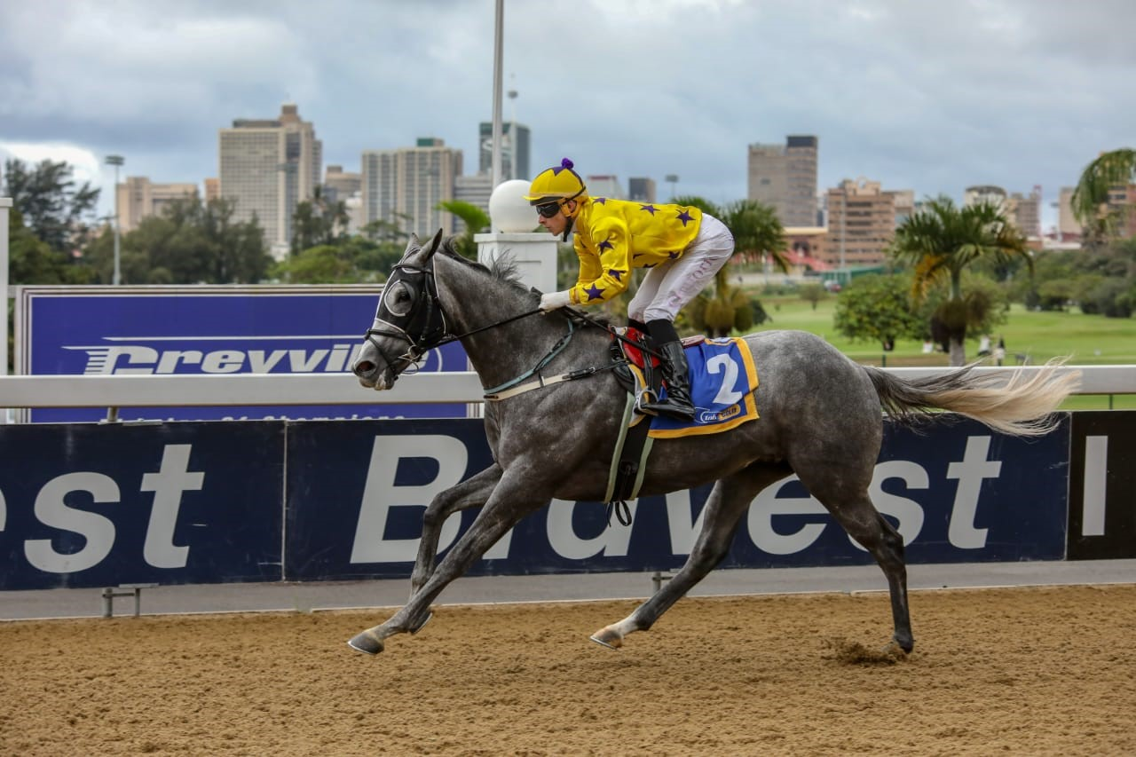 WHITE CEDAR winning on the Greyville Polytrack for the Hollywood Syndicate - April 17th 2019