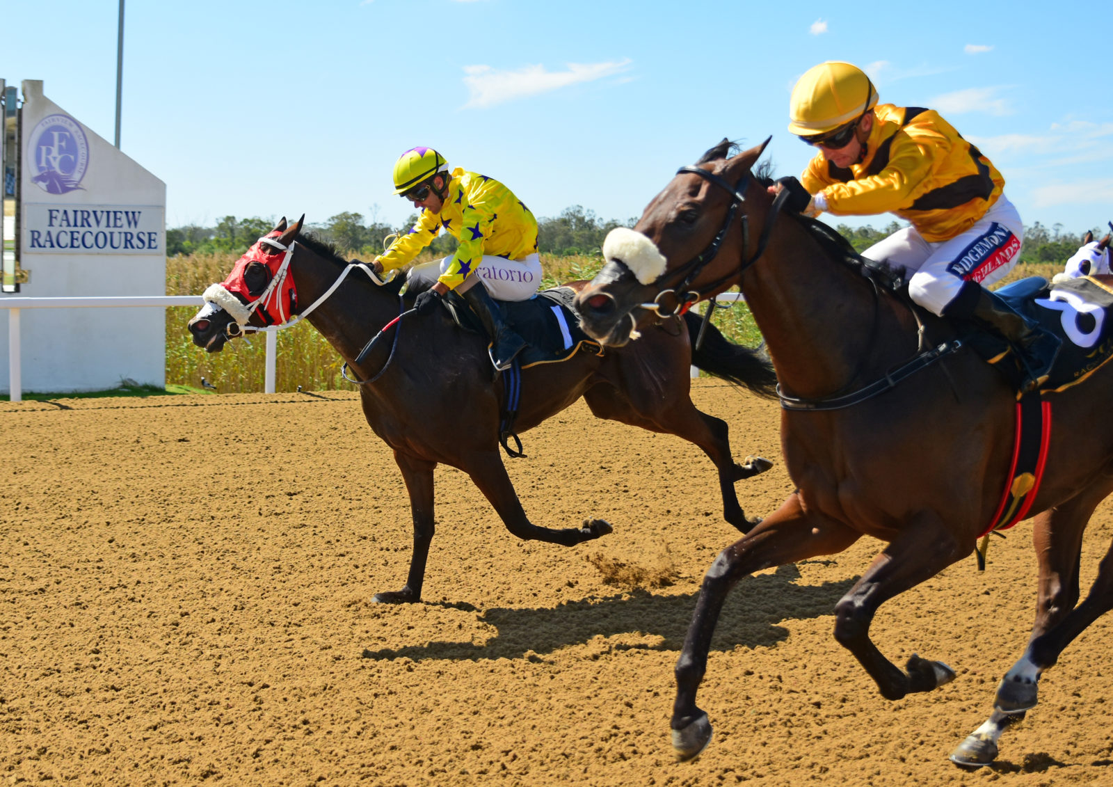 "The horse ""Hollywood Thunder"" winning at Fairview Racecourse"