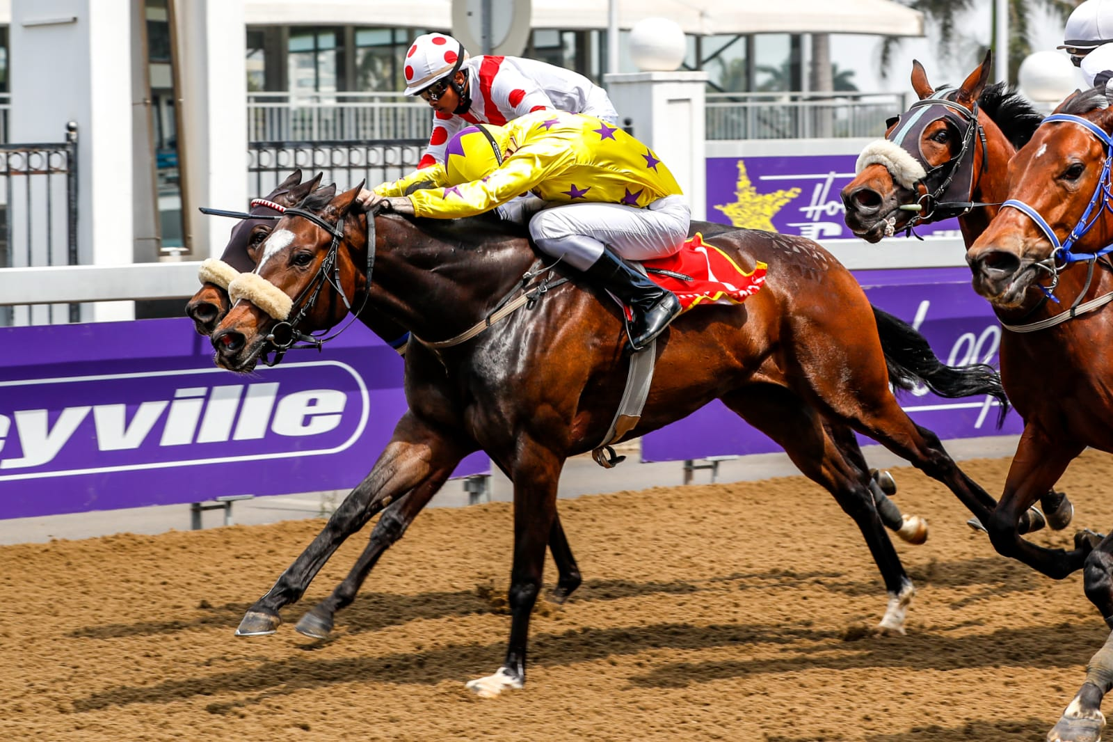 The horse IMBEJEJE crossing the finish line at Hollywoodbets Greyville