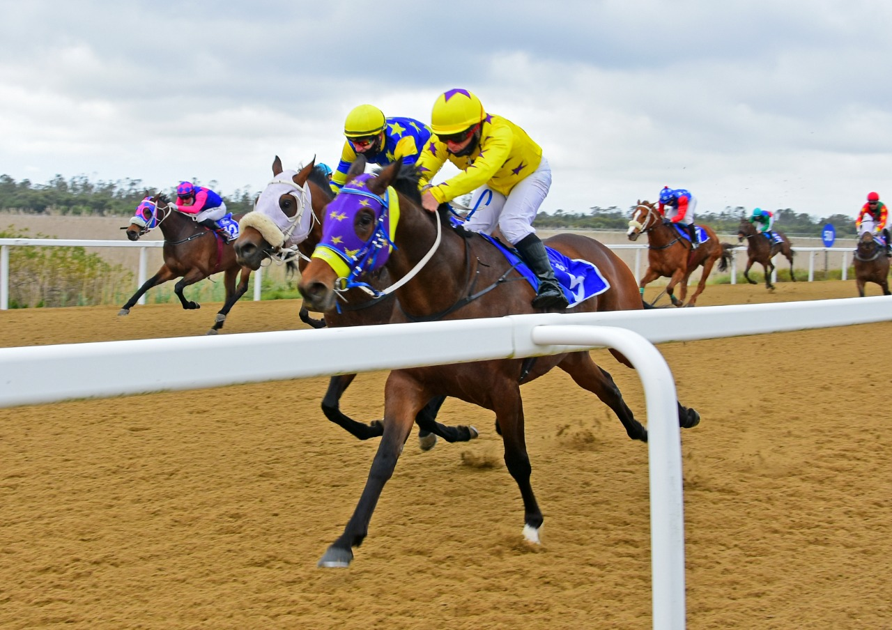 The horse ZIG ZAG winning at Fairview on 15th October 2021.