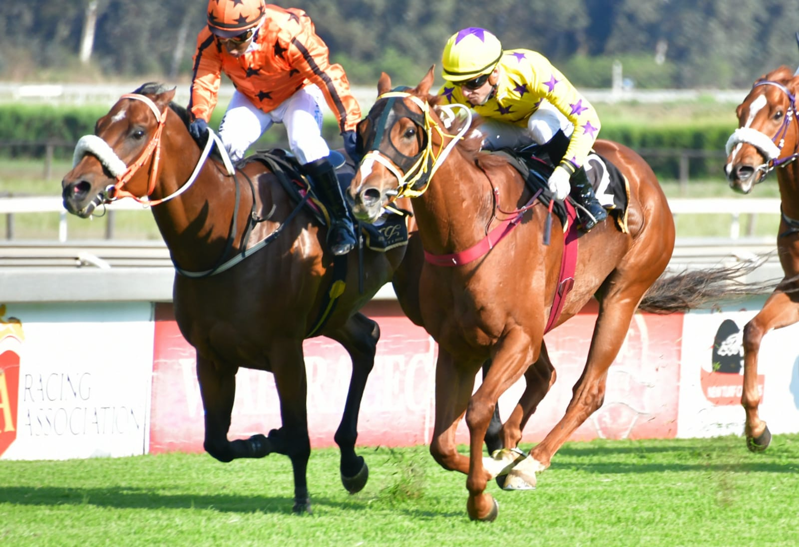 The horse Grappler winning at the Vaal.